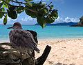 Bird of Paradise (7990887601).jpg