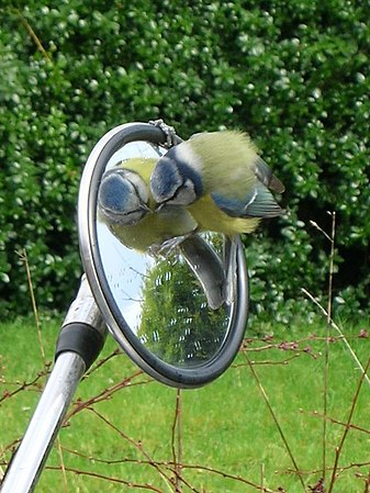 Bird on Bike - geograph.org.uk - 202475.jpg