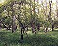 Birkbuschwiese moorwald.jpg