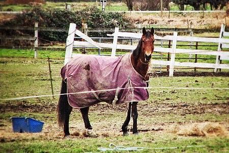 Blanketed Horse.jpg