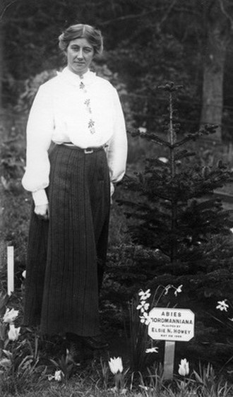 Elsie Howey - In 1909 Howey was invited to, Eagle House, the home of Mary Blathwayt to plant a Nordmann Fir. The honour was given to leading suffragettes