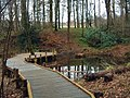 Boardwalk and pond, Mabie Forest - geograph.org.uk - 142768.jpg