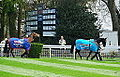 Bobs Worth & Sprinter Sacre (8714135715).jpg