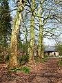 Bornem Boeterbloemenlaan Opgaande bomenrij van platanen (1) - 193398 - onroerenderfgoed.jpg