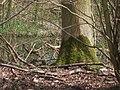 Bos - panoramio (3).jpg