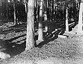 Bos op de Veluwe, Bestanddeelnr 252-0570.jpg