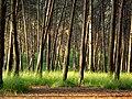 Bosc de can deu.jpg