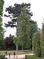 Bosquet de la Reine - Versailles - P1610987.jpg