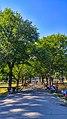 Boston Common on a Summer's Day.jpg