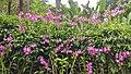 Botanical Garden Singapore (25287457028).jpg