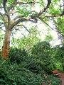 Botanischer Garten der TU Darmstadt - IMG 7037.JPG
