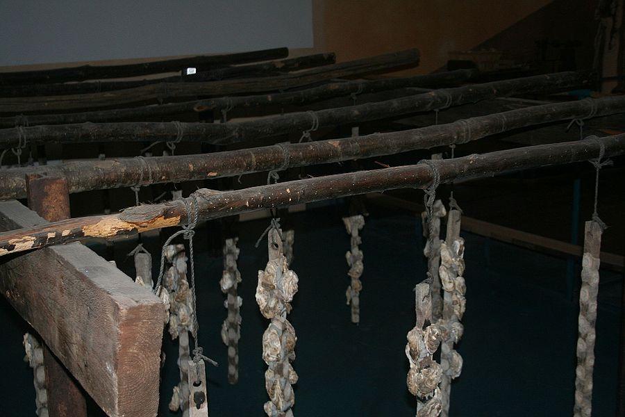 Bouzigues (Hérault) - musée de l'Étang de Thau - élevage des huitres (technique actuelle)