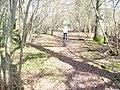 Boxalland Copse - geograph.org.uk - 1204759.jpg