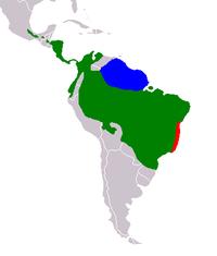 Arealo de bradipoj: verde: B. variegatus, blue: B. tridactylus, ruĝe: B. torquatus