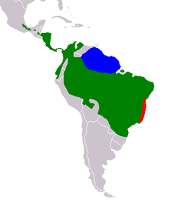 Distribución geográfica del género Bradypus. B. tridactylus en azul.