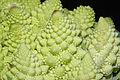 Brassica oleracea var. botrytis Plenck, 1794 1.JPG