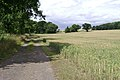 Bridleway beside a field of wheat - geograph.org.uk - 1401865.jpg