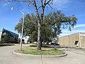 Brookhollow Esplanade Oaks, Jefferson Parish, Louisiana, January 2021 04.jpg