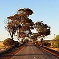 Bruce Rock-Merredin Road, 2014(5).JPG