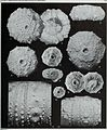 Bulletin of the British Museum (Natural History), Geology (1994) (20259705209).jpg