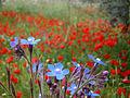 Burnatflowers10.JPG