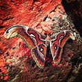 Butterfly Kannur.jpg