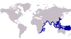 Range of the Malabar trevally