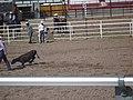 CFD Tie-down roping Tyler Prcin -4.jpg