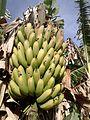 Cacho de bananas.jpg