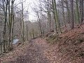 Cadman Wood - Track and The Moss (Brook) - geograph.org.uk - 1166929.jpg