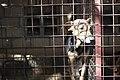 Caged dog.jpg