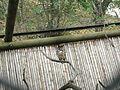 Cali Tiergarten 18.jpg