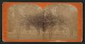 California orange tree, by Reilly, John James, 1839-1894.png