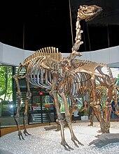 List of fossil species in the La Brea Tar Pits - Wikipedia ...