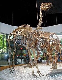 Image result for Camelops
