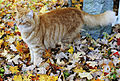 Camouflage Cat (2943738153).jpg