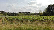 Tipica campagna toscana. Vigneti Chianti Classico (vino) a Empoli