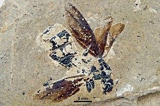 1999 in paleontology - Camponotus crozei