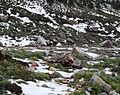 Can you spot the Marmot - Flickr - brewbooks.jpg