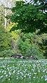 Canada Geese at Inglis Falls (9002597733).jpg