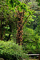 Cannonball Tree (5216977960).jpg