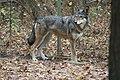 Captive Female at Sandy Ridge (6260464261).jpg