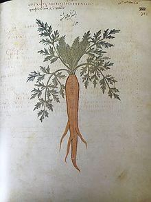 carrot wikipedia rh en wikipedia org