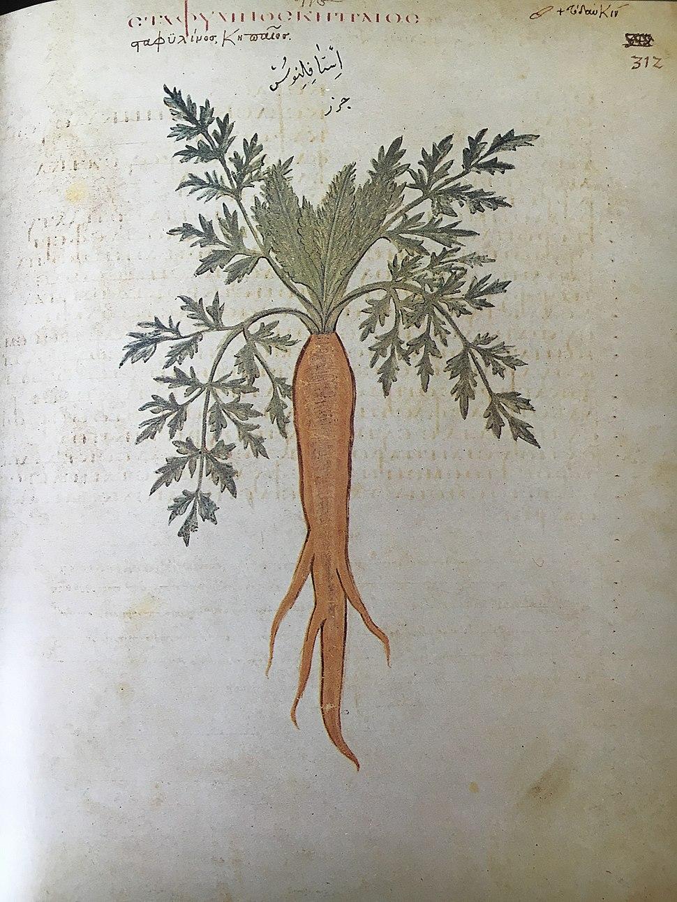 Carrot, Juliana Anicia Codex