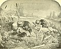 Castorologia, or The history and traditions of the Canadian beaver (1892) (20352610028).jpg