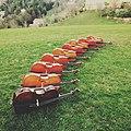 Cellos am Weizberg (Steiermark).jpg