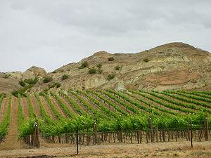 Central Otago wine region - Vineyard in Central Otago