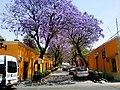 Centro, Tlaxcala de Xicohténcatl, Tlax., Mexico - panoramio (269).jpg