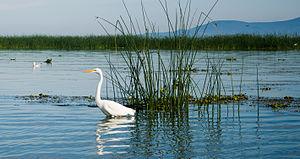 Lake Chapala - Chapala Lake