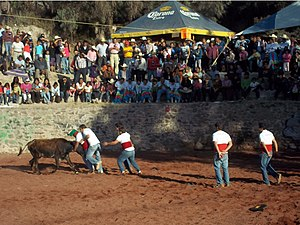 Portuguese Mexican - Portuguese-style bullfighting in Mexico